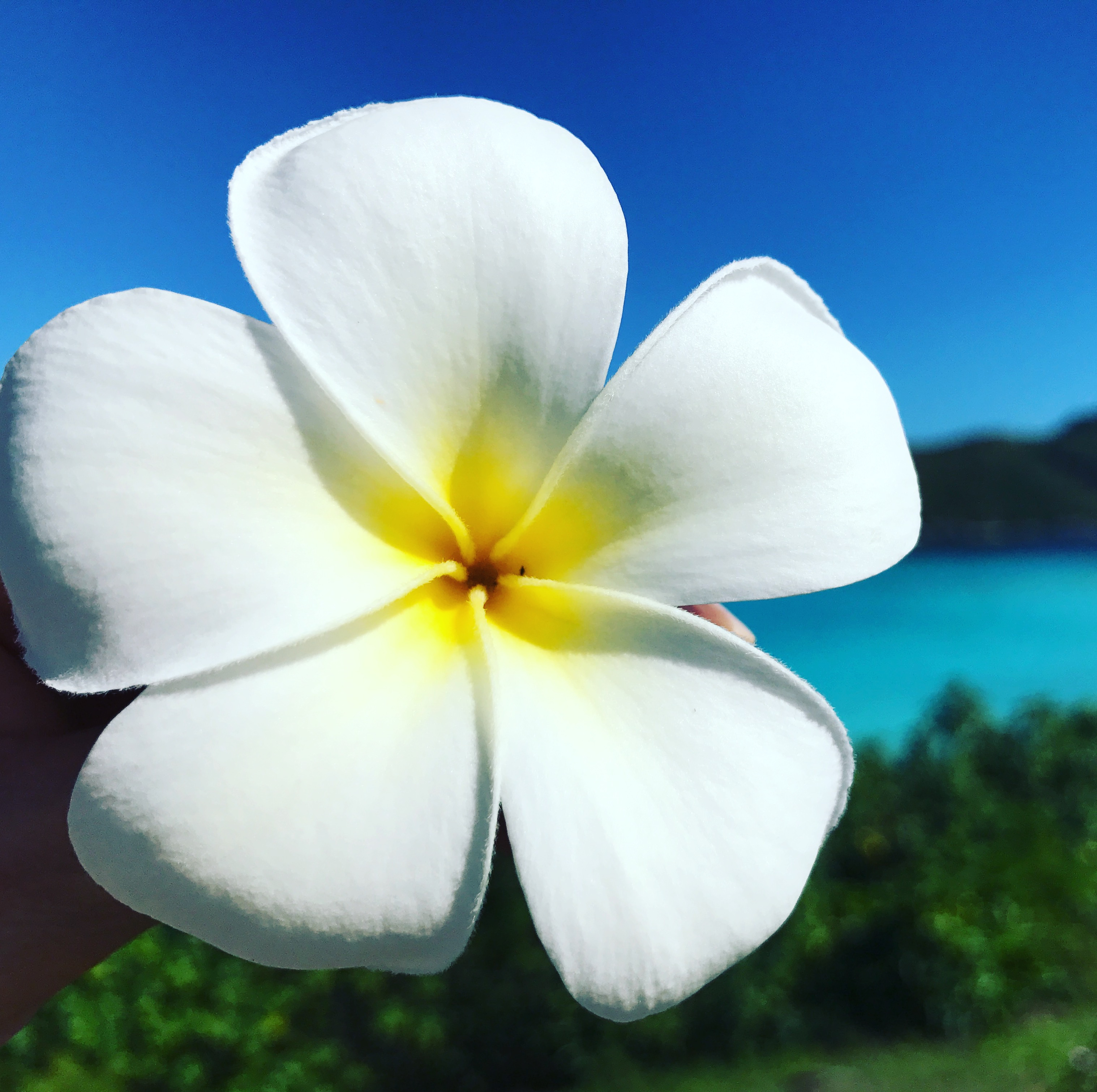 Bora Bora Flower